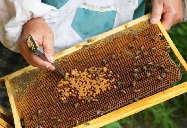 пчелы (Custom)