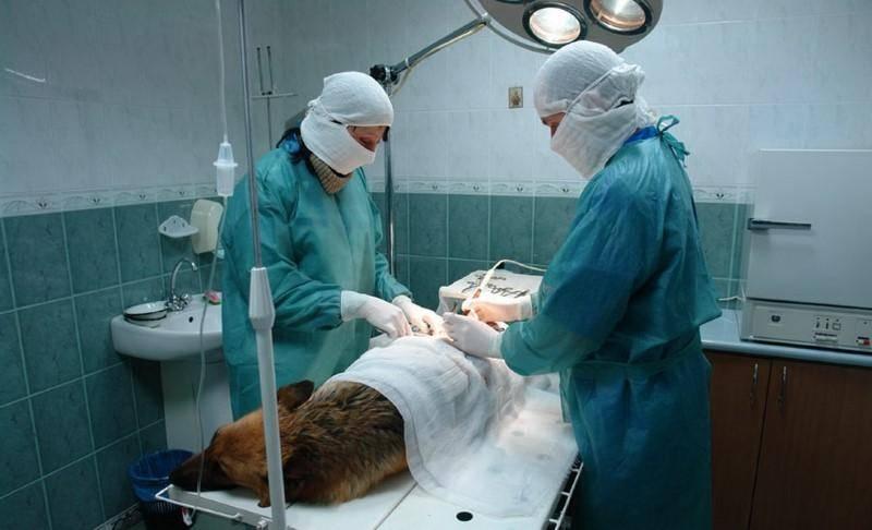 Ветеринарная клиника: бизнес-план с расчетами.