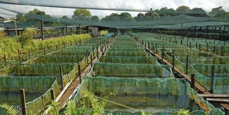 Разведение раков в искусственных водоемах как бизнес.
