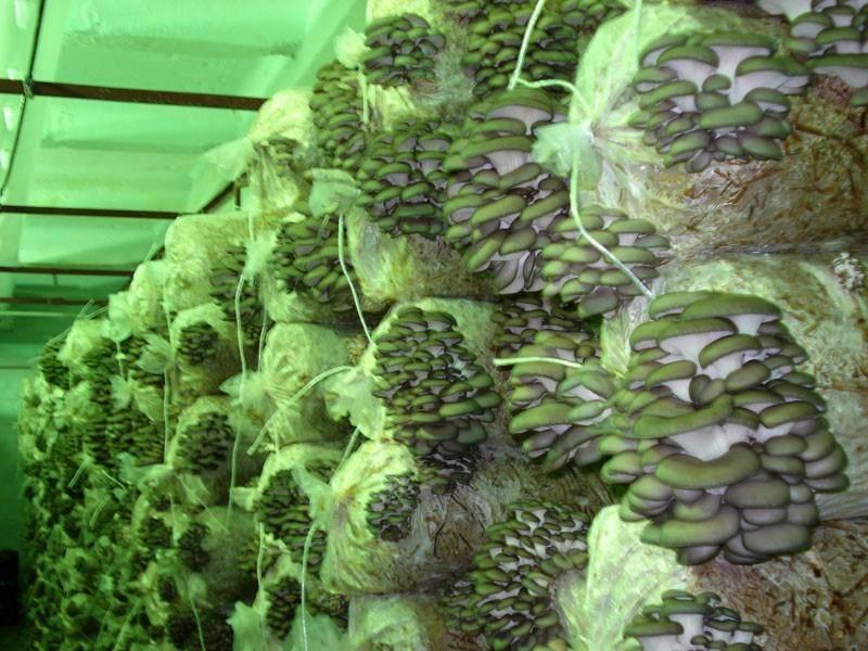 Как сбыть полученную грибную продукцию?
