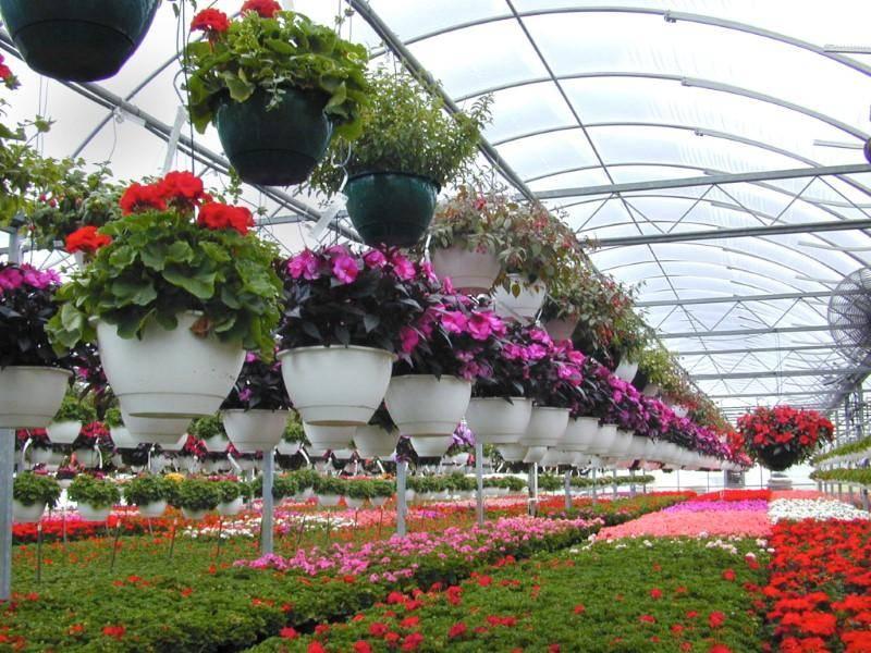 Какие цветы выращивать на продажу круглый год