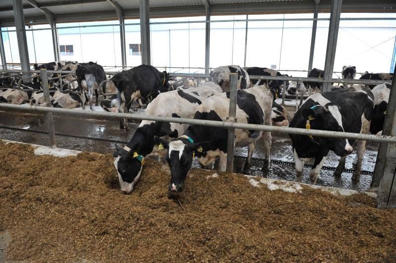 Бизнес-план молочной фермы с расчетами.