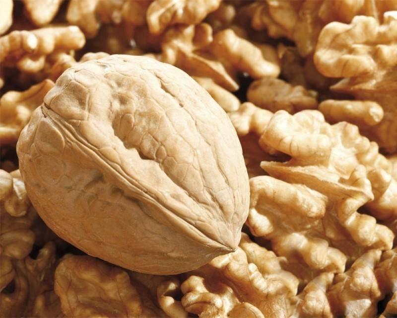 Примерный бизнес-план выращивания грецких орехов в домашних условиях.