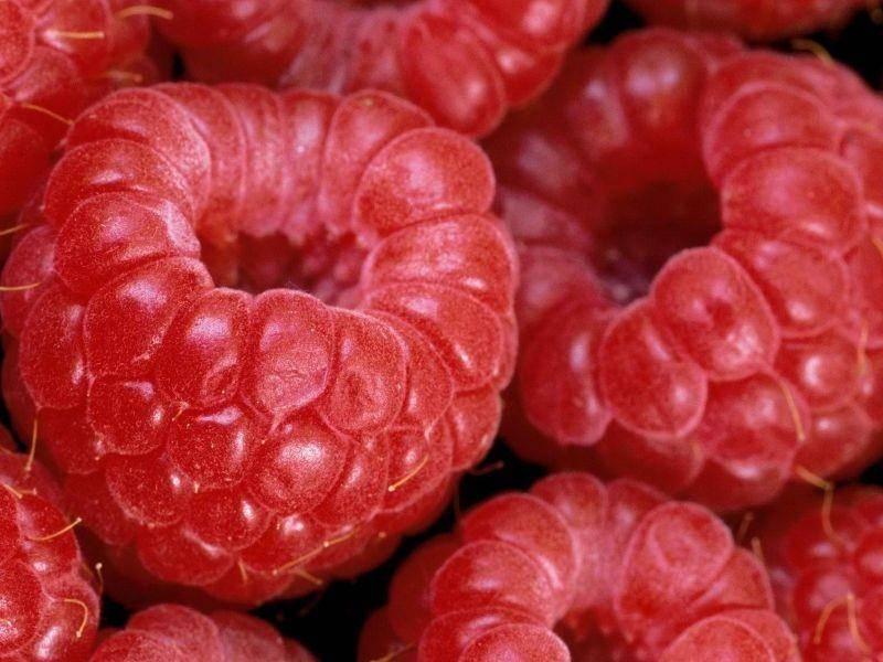 Основные преимущества и недостатки бизнеса по выращиванию малины.